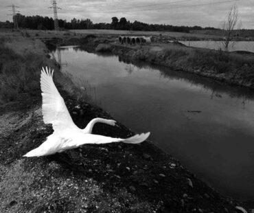 Arek Gola_Nadzieja na Moście do Nieba_Galeria (381)